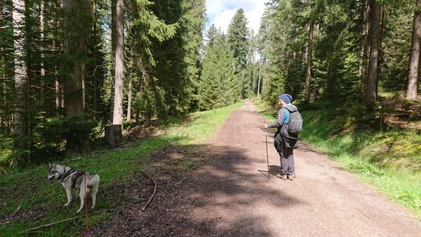 Explore the Groppertal forest trail